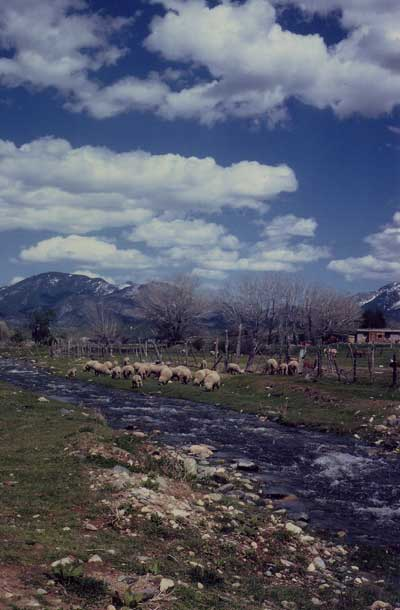 Taos Creek with sheep at New Buffalo.